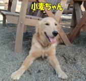 小麦ちゃん.jpg